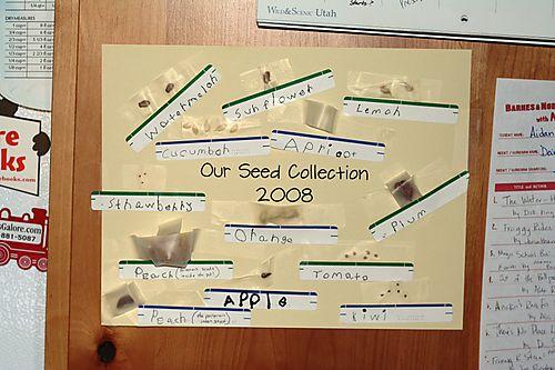 Seeds08 web