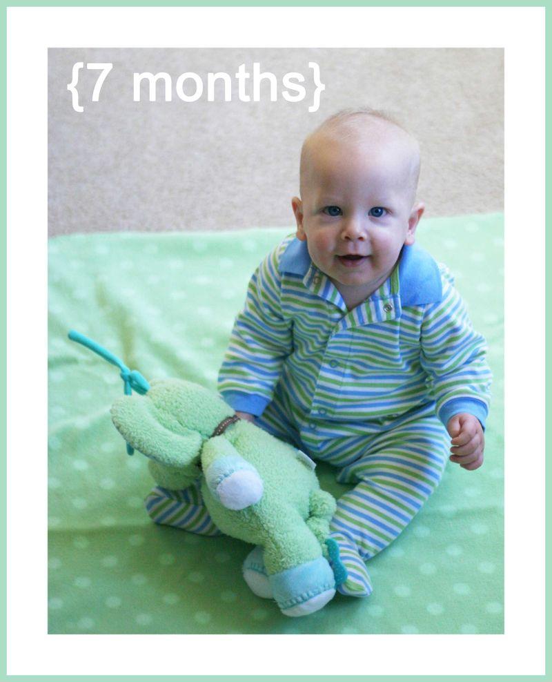 7-months-web